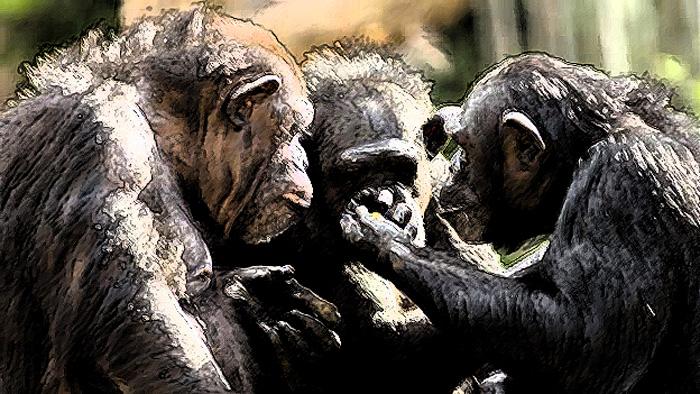 El lenguaje humano y la divergencia con losanimales