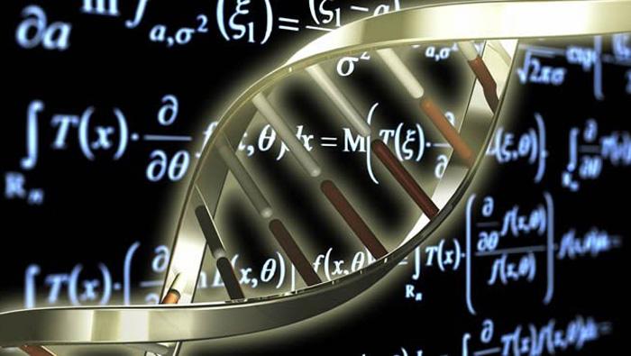 Buscando matemáticas en labiología